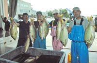 タマン、ことし一番の大漁 沖縄・都屋漁港に歓声「刺し身も煮付けもうまい!」