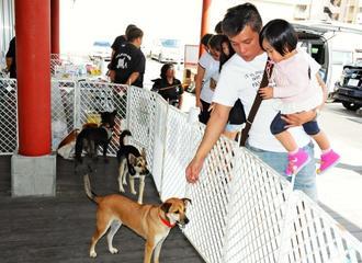 譲渡会に訪れ、犬と触れ合う親子連れら=那覇市・PETBOX那覇店