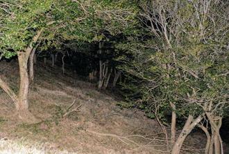女性の遺体が見つかった佐賀県吉野ケ里町松隈の山中の現場=21日午後