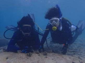 海底に移植された幅5センチほどのシコロサンゴの株=2日午後、読谷村高志保沖(すみだ水族館提供)