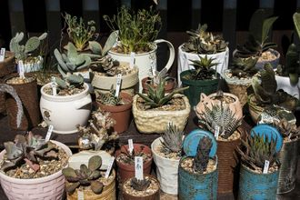 【大城さん宅のお庭は多肉植物が120種類以上】