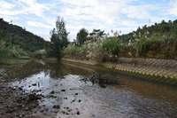 生物多様性復活へ、自然な流れに 環境再生工事が始まった沖縄本島北部の川【深掘り】