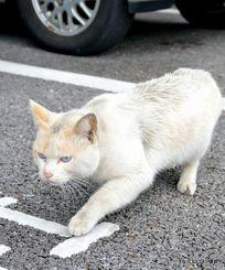 駐車場を歩く猫