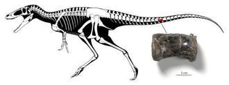 ティラノサウルス類の骨格図と発見された化石((C)増川玄哉氏)