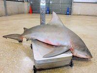 サメ目撃の沖縄のビーチ 捕獲で27日再開判断へ