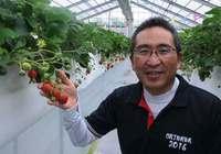 「沖縄でおいしいイチゴを作りたい」 競争や風評被害を越え、赤く実る
