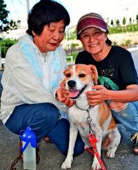被災犬「沖縄で元気です」 毎月11日は特別な日