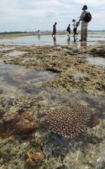 那覇市など都市部の海岸でもサンゴ礁が残っている