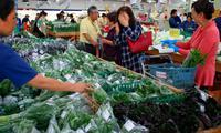 4月8日は「島ヤサイ」の日 沖縄、伝統野菜の味わいPR