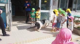 子どもたちと一緒に遊ぶぷりんちゃん=2018年4月(大山幼稚園提供)