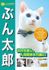 副市長に選ばれたぶん太郎(島猫力向上委員会提供)