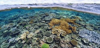 豊かな自然が残る浦添市西海岸の「カーミージーの海」。写真奥側はサンエー浦添西海岸パルコシティ=17日、浦添市西洲(伊禮健撮影)