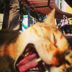 「くぁぁあああ」沖縄国際大学で昼休みに。
