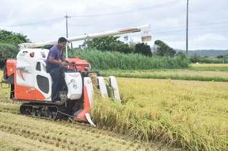 台風7号の接近を受け、コンバインを使って大急ぎで米を収穫する農家=30日午後2時13分、名護市羽地