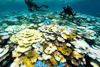 台風来ない沖縄、サンゴ白化が深刻 「このまま高水温続くと死滅」