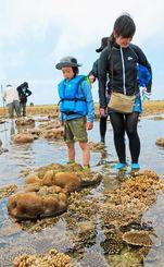 八重干瀬のサンゴを観察するツアー参加者ら=1日午後、宮古島市・池間島沖(新垣亮撮影)