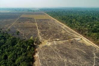 ブラジル・アマゾンの森を焼き払ってつくられた牛の放牧場=8月(AP=共同)