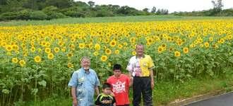 辺り一面を黄色に染めているヒマワリ畑=5月31日、名護市天仁屋