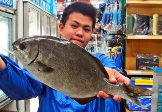 東村で43センチ、1.5キロのイスズミを釣った與儀尚志さん=12月23日