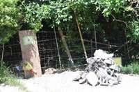 立ち入り禁止から1カ月 沖縄のパワースポット「備瀬のワルミ」の今