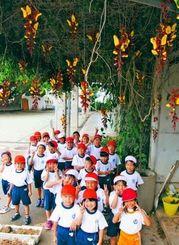 黄金や茶褐色の花をつけるマイソルヤハズカズラの下で、元気いっぱいの1年生=嘉手納小学校
