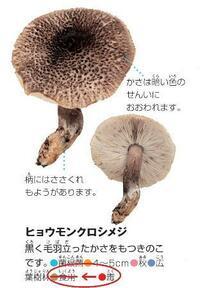 小学館、毒キノコ「食用」と誤記 6月発売の「図鑑NEO」で