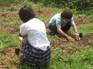 「コミュッと!」で農作業をするAさん(手前)=うるま市
