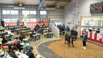 子牛の初競りの様子=2021年1月16日、今帰仁家畜市場