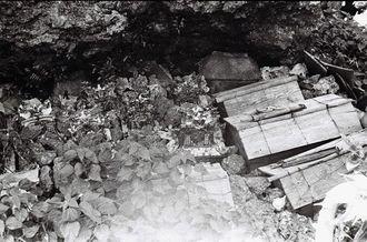 久高島の崖の陰で、故人を納めた木棺を置き、12年に1度、とら年の旧暦10月20日に一斉に開け、遺族が洗骨した。ひつぎの上のわらじなどについて、祭祀に詳しい地元の福治洋子さん(77)は「亡くなった後の世界(後生、グソー)に無事に着きますように、また、旧盆などの折に家に帰ってこれるようにという意味」と語る。骨は、写真中央に見える陶器や石でできた「厨子甕(ずしがめ)」に納めた。久高島区長の西銘正博さん(65)は「銅線で巻いて岩などに結びつけ、動かないようにしていた」と話す。内間新三さん(89)は「それでも、台風などで動いたり、ふたが開いてしまったりすることはあっただろう」とみる(写真は朝日新聞社提供)