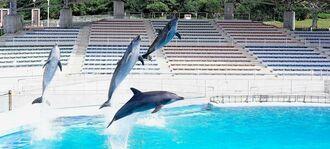 オキちゃん劇場再開に備え、トレーニングに励むイルカたち=20日、本部町の海洋博公園(下地広也撮影)