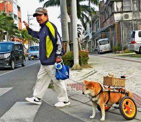 横断歩道で上原文夫さん(左)の「ゴー」の合図を待つ車いす犬「まおちゃん」=石垣市美崎町