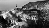 [きょうナニある?]/話題/清水寺 千本の桜で美しく/ライトアップ始まる