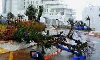 台風で倒れたホテル敷地内の樹木。青色の防風ネットも強風にあおられていた=28日午後4時半ごろ、石垣市真栄里(新崎哲史撮影)