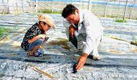 [おしごと発見・家族の職場訪ねたよ](32)/営農指導員/畑回って農家さん助ける/訪ねた人 大城颯珠君(豊見城小1年)/働く人 父・厚さん(44)