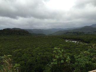 自然豊かな西表島(竹富町)
