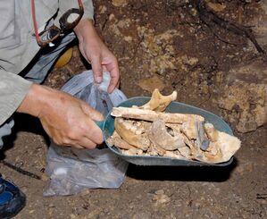 ガマの中で見つかった遺骨。高齢者や子どものものとみられる遺骨があった