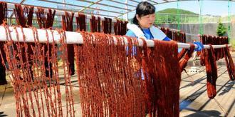泥染めのため、グールやティカチで下染めをした絹糸を干す織り手。久米島の秋の風物詩でもある=2018年11月、同町真謝