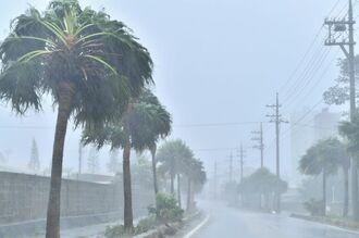 横殴りの雨と強風に煽られる街路樹=5日午後2時3分、南大東村役場近く