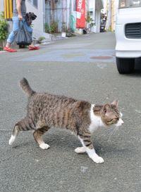 沖縄で1日7匹の猫が車にひかれ死んでいる 殺処分と並ぶ年間2684件