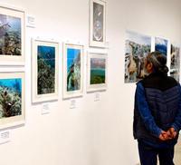 伊禮健・花城太記者が写真展 沖縄の海テーマに28日まで
