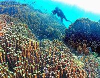 今も年に数度「新種」発見…研究者も驚く独特の世界 沖縄・大浦湾を知っていますか?