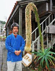 約20年で開花したというハツミドリと植えた稲福哲雄さん=南城市玉城玉城、「玉城焼」ギャラリー