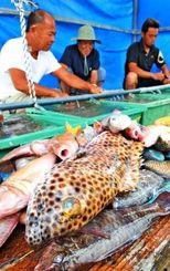 奥武島ハーリーで振る舞う魚をさばく漁師=2日、南城市・奥武島(長崎健一撮影)