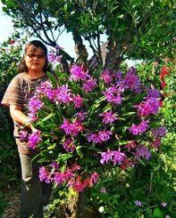 宮里さん宅の庭先で色鮮やかなミニカトレアが見頃を迎えている=16日、伊江村西崎区