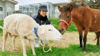 今年の干支の馬と来年の羊。与那国馬(右)がヒツジにキッスでエールを送る=29日午前、沖縄市・沖縄こどもの国