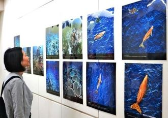 辺野古の海の豊かさを写した写真に見入る来場者=26日、東京・銀座のギャラリー・アートグラフ