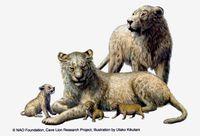 凍土から絶滅ライオン/日ロチーム、シベリアで発見/ホラアナライオンの子 3匹