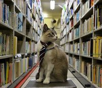 ニャンニャンニャン♪ 思わず笑顔 沖縄県立図書館に1日ねこ館長