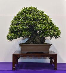 金賞を受賞した豊里健さん(恩納村)のガジュマルの作品