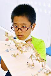 真剣表情 真剣な表情でマングースの骨格標本をつくる子ども=11日